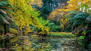 Обои Австралия Парки Осенние Пруд Мосты Деревья Alfred Nicholas Memorial Gardens Природа