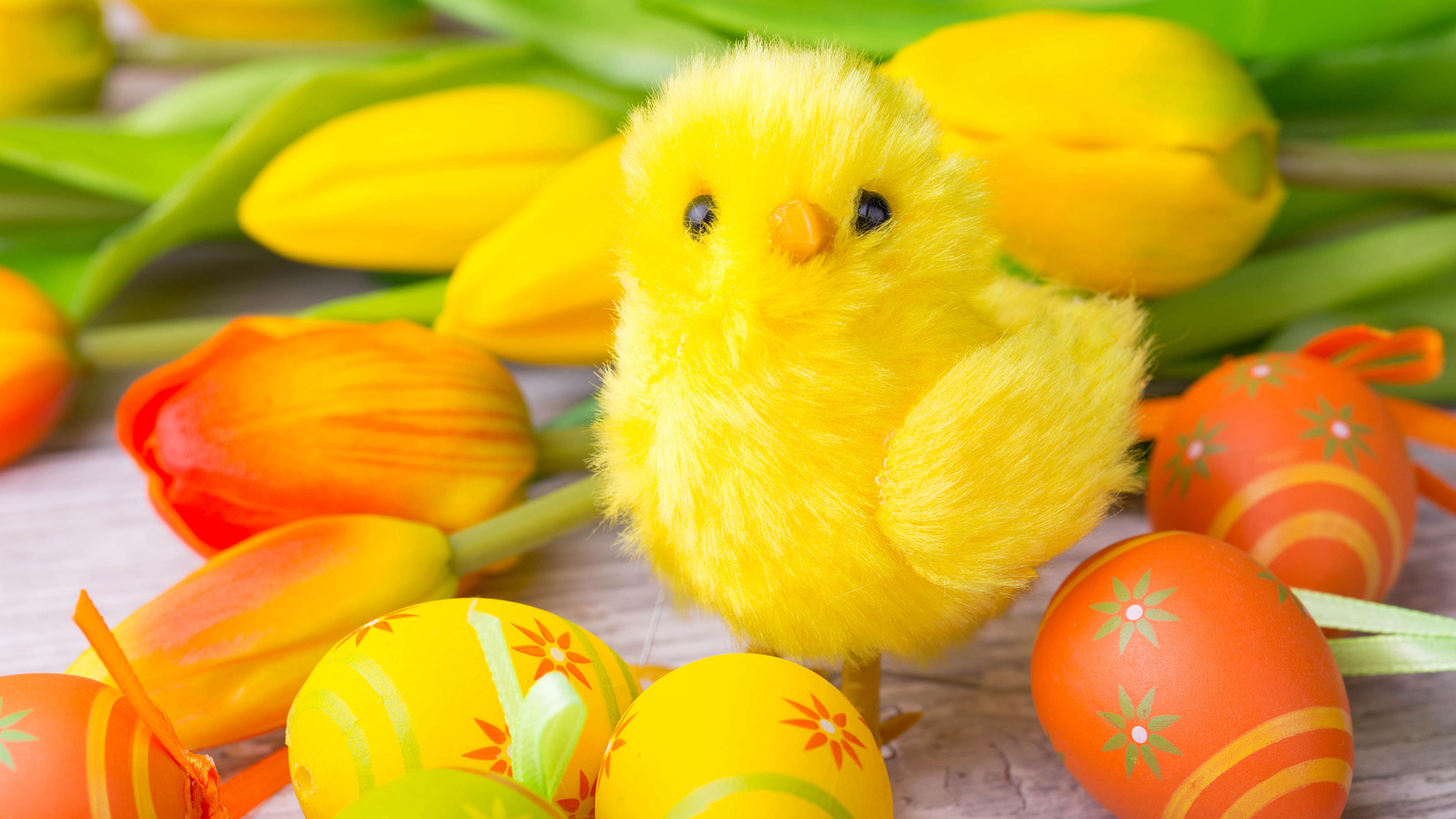 циплята яйца гнездо без смс