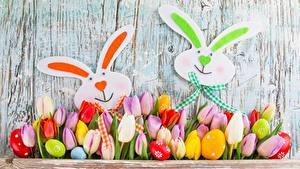 Фотографии Пасха Кролики Тюльпаны Цветы