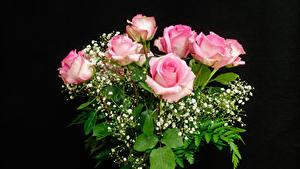 Фотография Букет Роза Черный фон Розовая Цветы