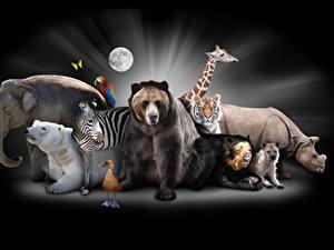 Фотография Слоны Полярный Бурые Медведи Зебры Птицы Гиппопотамы Жирафы Тигры Черный фон животное