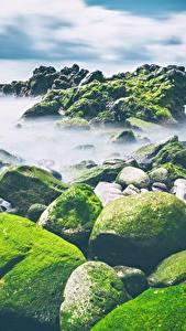 Фото Камни Побережье Мха Природа