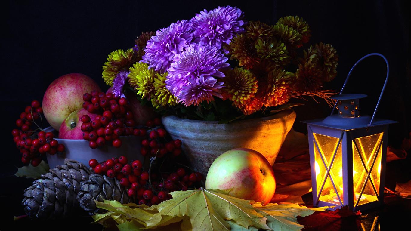 Обои Листья Фонарь Астры Цветы Яблоки Шишки Ягоды Натюрморт Черный фон 1366x768 Листва