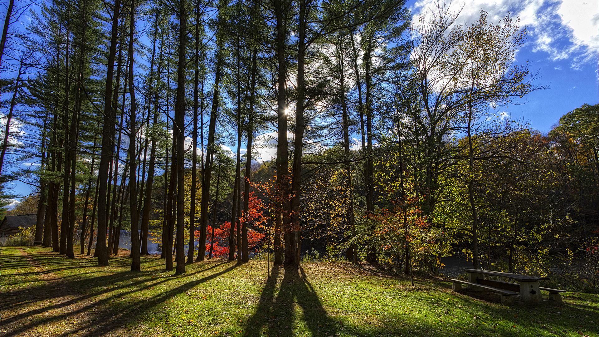 Фотография штаты Letchworth State Park Природа парк Скамейка деревьев 1920x1080 США америка Парки Скамья дерево дерева Деревья