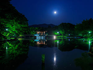 Картинка Япония Парки Пруд Мосты Пагоды Деревья Ночью Луной Nara Park Природа