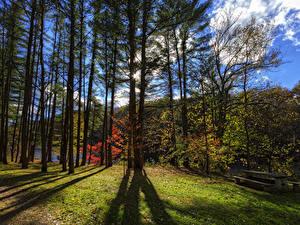Фотография Штаты Парк Деревьев Скамейка Letchworth State Park Природа