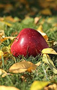 Фото Яблоки Осенние Траве Листва Боке