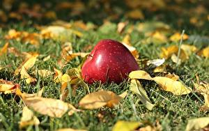Фото Яблоки Осенние Траве Листва Боке Природа