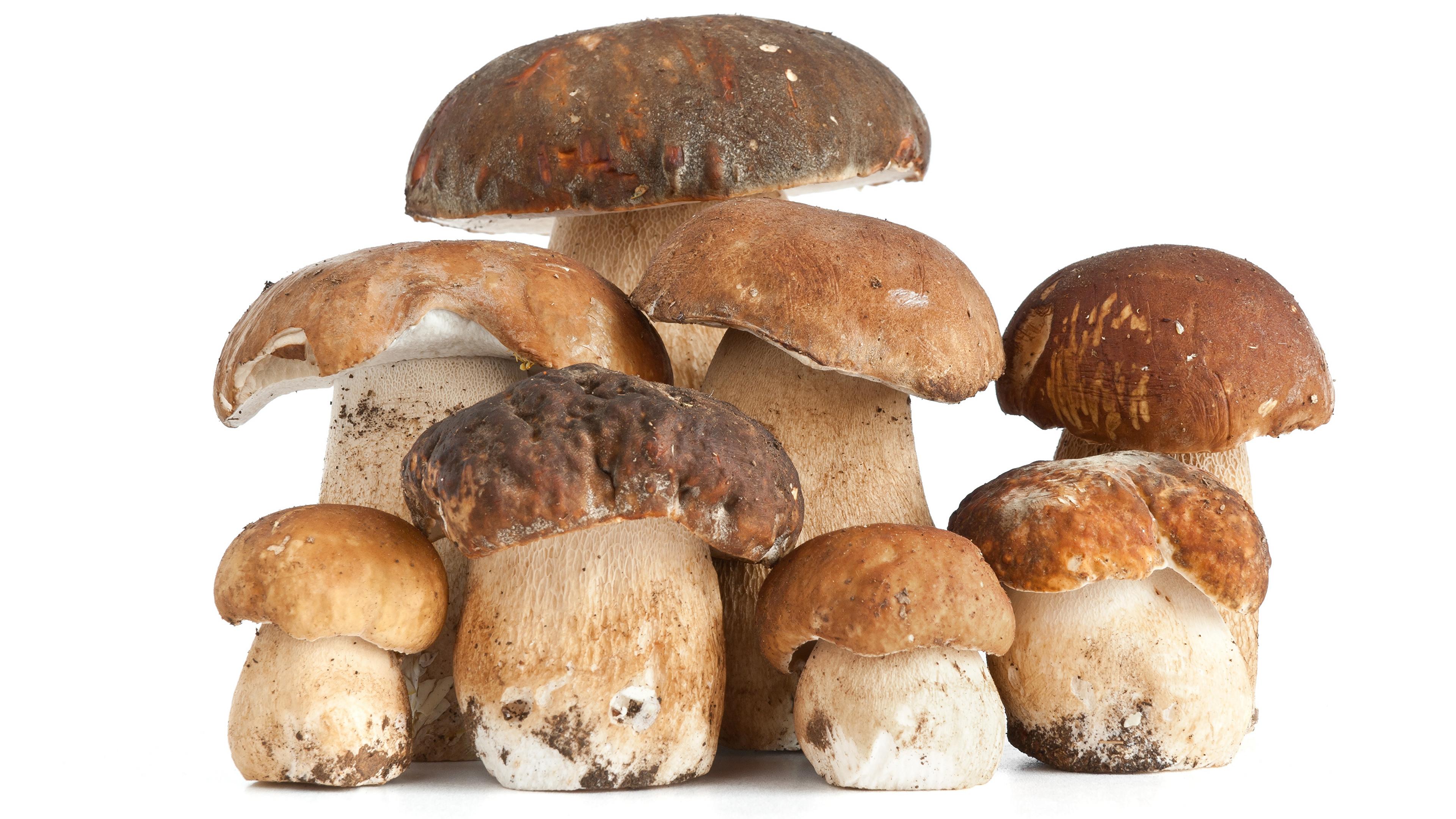 еда грибы food mushrooms без смс