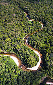 Обои Бразилия Лес Речка Сверху Amazon Jungle Природа