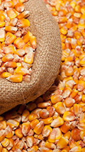Фотографии Кукуруза Много Зерна