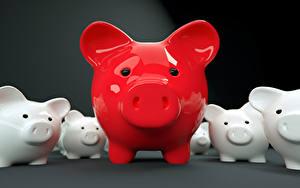 Фотография Домашняя свинья Красный Спереди