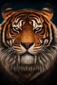Фото Тигры Клыки Черный фон Морды Смотрят Усы Вибриссы Saber-toothed животное