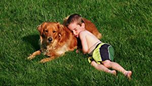 Картинки Собака Траве Ретривер Мальчишка Спит ребёнок Животные