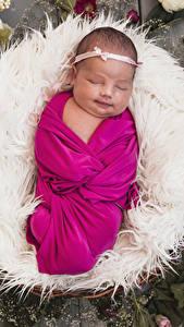 Фотография Роза Младенцы Спят Дети