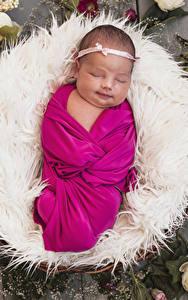 Фотография Розы Грудной ребёнок Спящий