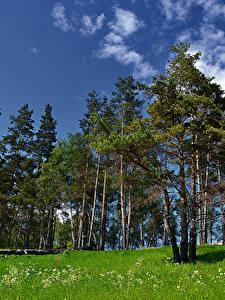 Фото Россия Деревья Трава Pushchino Moscow region Природа