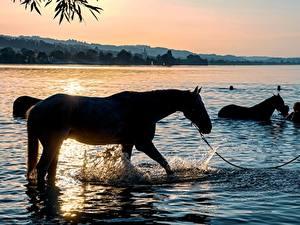Фотография Рассветы и закаты Озеро Лошади Вода С брызгами Животные