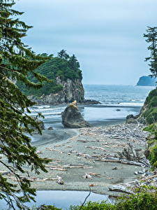 Картинка США Парк Озеро Вашингтон Ели Скале Залива Olympic National Park
