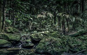 Обои Австралия Лес Камень HDR Мох Пальмы Strickland State Forest Природа