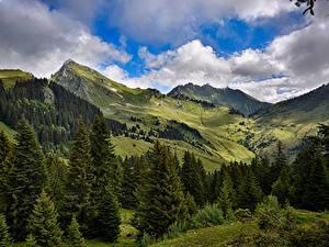 Картинка Франция Пейзаж Луга Горы Ель Облачно Mieussy Природа