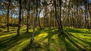 Обои Великобритания Осенние Парки Деревья Трава Bole Hill Derbyshire Природа