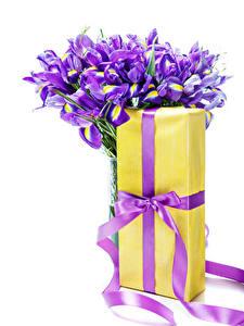 Фотографии Букеты Ирисы Белый фон Подарок Бантик цветок