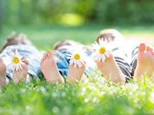 Фото Ромашка Боке Втроем Трава Лежачие Ног Пятка ребёнок