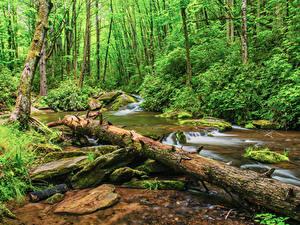 Фото США Лес Камень Кустов Бревно Мох Ручей Pisgah National Forest North Carolina Природа