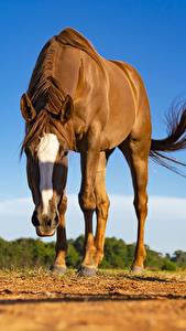 Фото Лошадь Взгляд Размытый фон животное