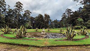Картинка Шри-Ланка Парки Фонтаны Деревьев Queen Victoria Park Природа