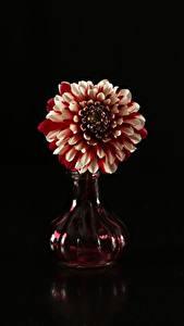 Фотографии Георгины На черном фоне Ваза цветок