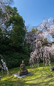 Обои Парк Весенние Цветущие деревья Скульптура Будда
