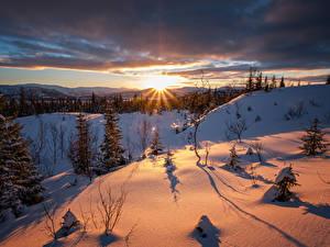 Картинка Зимние Рассвет и закат Снега Ели Лучи света Природа