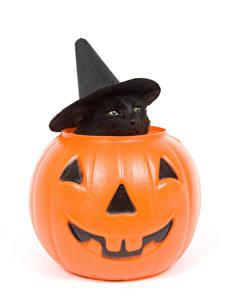 Фотография Праздники Хеллоуин Коты Тыква Белый фон Котята Шляпа Животные