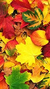 Фотографии Осенние Текстура Листва Клёна Природа