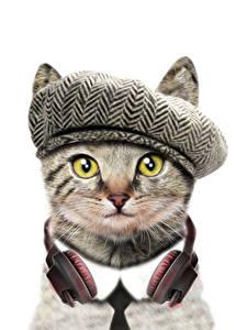 Фото Кошки Белый фон Забавные Наушники Морда Животные