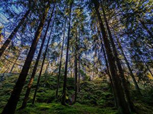 Картинки Финляндия Хельсинки Лес Деревья Мох Kasaberget Forest Природа
