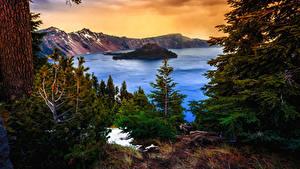 Картинки Америка Парки Гора Озеро Ель Crater Lake National Park Oregon Природа