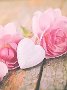 Фотографии День святого Валентина Розы Доски Розовый Сердца цветок