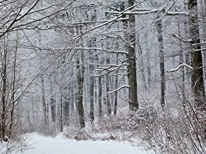 Обои Зима Лес Снег Дерево Природа
