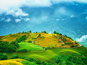 Фотографии Тайвань Поля Холмы