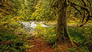 Картинки Канада Осенние Леса Речка Ствол дерева Мох Chemainus River Природа