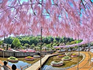 Картинки Япония Токио Парки Пруд Вистерия Дизайн Природа
