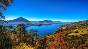 Картинка Швейцария Пейзаж Озеро Осенние Леса Деревья Thun Canton of Berne Природа