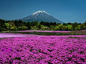 Фото Япония Киото Парки Флоксы Горы Пруд
