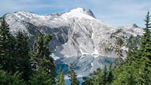 Картинки США Парк Горы Озеро Ели Mount Rainier National Park Cyclone Lake Природа