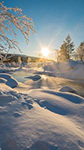 Обои Зима Рассветы и закаты Снег Ветвь