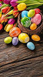 Обои Праздники Пасха Тюльпан Яйца Цветы