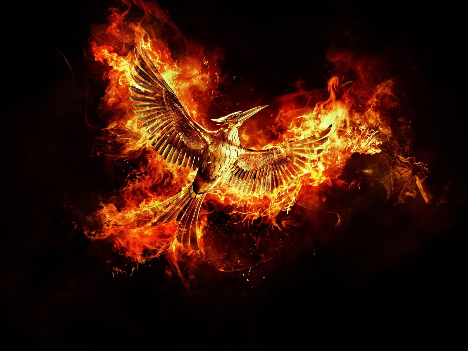 Картинки Птицы Феникс Фэнтези Огонь Черный фон 1600x1200